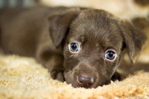 מיטה לכלב באנימל שופ